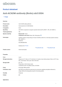Anti-ACADM antibody (Biotin) ab212024 Product datasheet 1 Image Overview