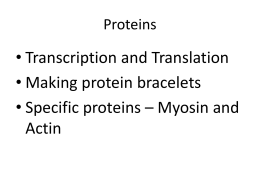 • Transcription and Translation • Making protein bracelets Actin
