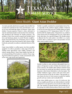 Forest Health: