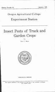 Insect Pests of Truck and Garden Crops Experiment Station
