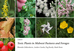Toxic Plants in Midwest Pastures and Forages A4019