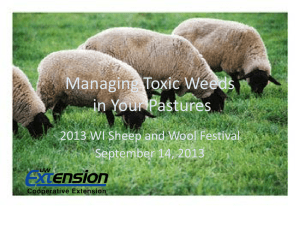 Managing Toxic Weeds in Your Pastures 2013 WI Sheep and Wool Festival