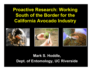 Proactive Research: Working South of the Border for the California Avocado Industry