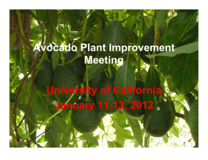 Avocado Plant Improvement Meeting University of California January 11-13, 2012