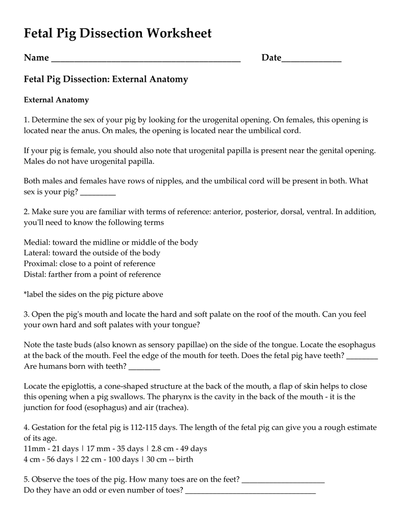 worksheet. Pig Dissection Worksheet. Grass Fedjp Worksheet Study Site