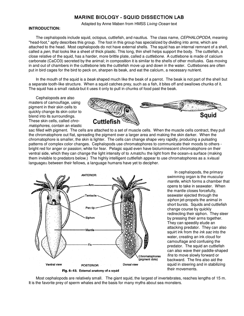worksheet Squid Dissection Worksheet 014090412 1 6b38c84903d96a8b443a90bb975273f1 png