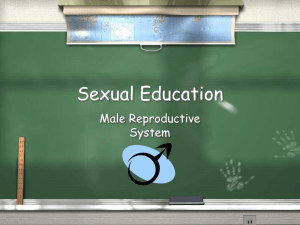 Sexual Education Male Reproductive System