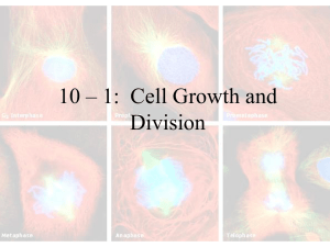 10 – 1:  Cell Growth and Division