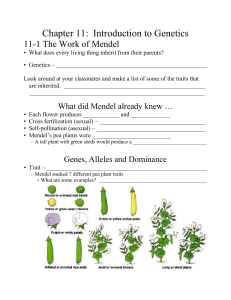 Chapter 11:  Introduction to Genetics 11-1 The Work of Mendel