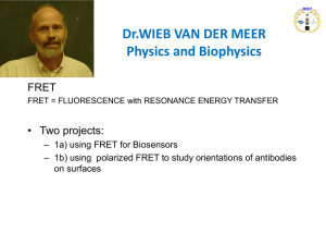 Dr.WIEB VAN DER MEER Physics and Biophysics FRET