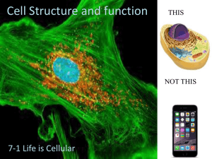 Cell Structure and function 7-1 Life is Cellular THIS NOT THIS