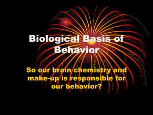 Biological Basis of Behavior So our brain chemistry and make-up is responsible for