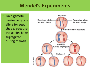 Mendel's Experiments • Each gamete carries only one allele for seed