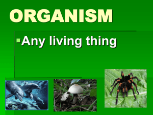 ORGANISM  Any living thing