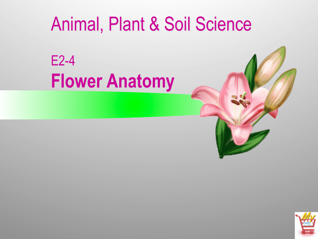 Animal, Plant & Soil Science Flower Anatomy E2-4