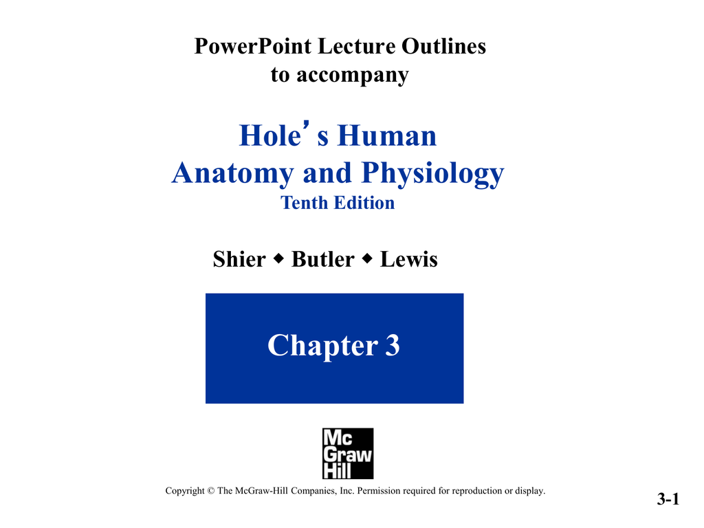 Hole Anatomy and Physiology Chapter 3 PowerPoint Lecture Outlines