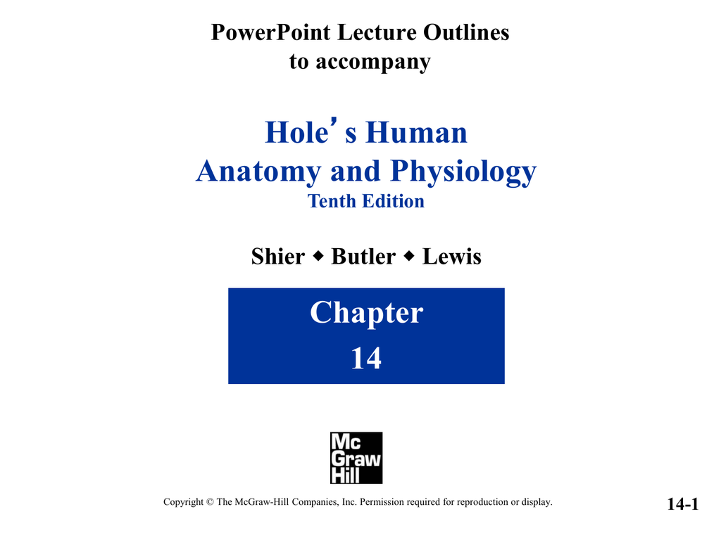 Hole Anatomy and Physiology Chapter 14