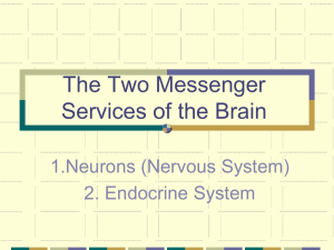The Two Messenger Services of the Brain 1.Neurons (Nervous System) 2. Endocrine System