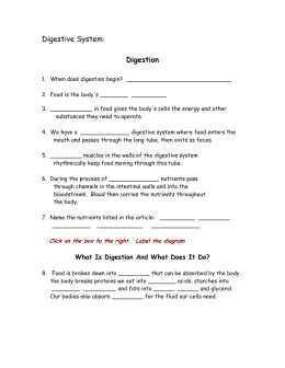 review sheet for quest on digestive and excretory systems rh studylib net High School Biology Homework Help AP Biology Study Guides
