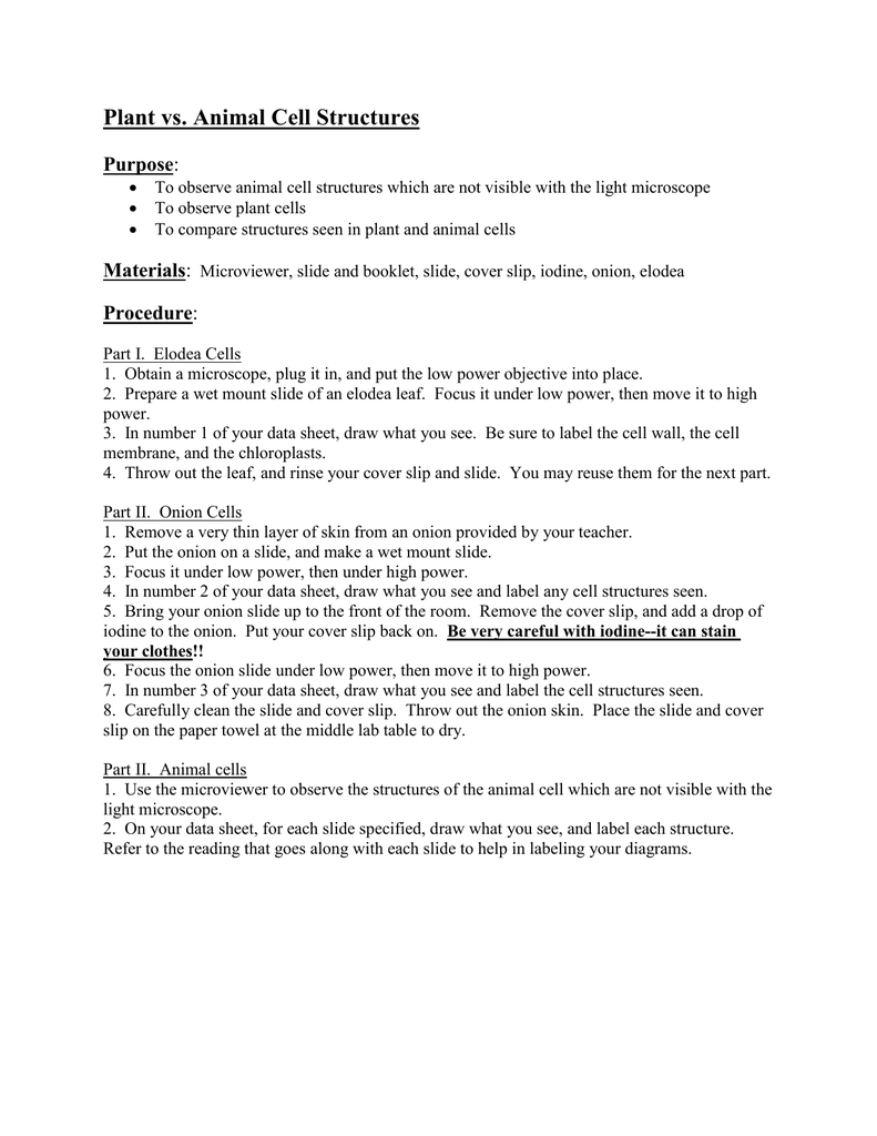 Plant Vs Animal Cell Structures Purpose Diagram Worksheet On Structure