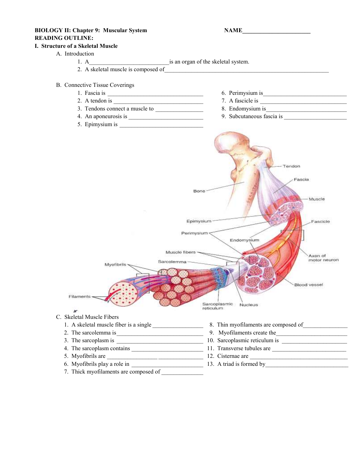 Biology Ii Chapter 9 Muscular System Name