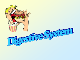 journey through the digestive system essay The pathway of food through the digestive system  sign up to view the whole essay and download the pdf for anytime access on your computer, tablet or smartphone.