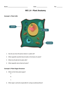 WS 1.4 - Plant Anatomy Concept 1: Plant Cells  Name; ____________________________