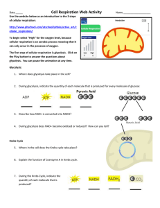 Cell Respiration Web Activity