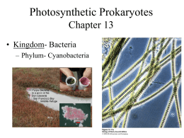 Photosynthetic Prokaryotes Chapter 13 • Kingdom- Bacteria – Phylum- Cyanobacteria