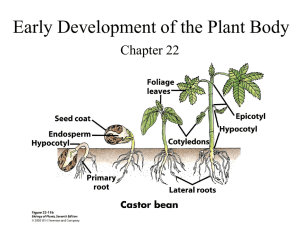 Early Development of the Plant Body Chapter 22