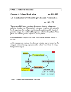 UNIT 2: Metabolic Processes  Chapter 4: Cellular Respiration pg. 166 - 209