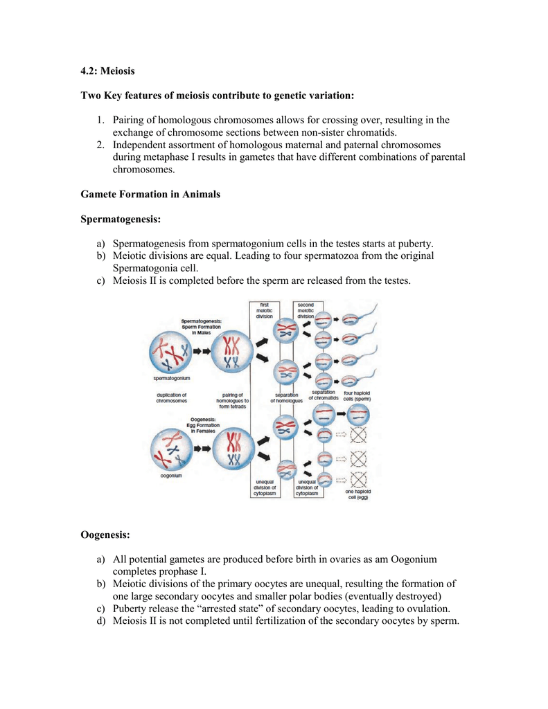 4.2: Meiosis Two Key features of meiosis contribute to ...