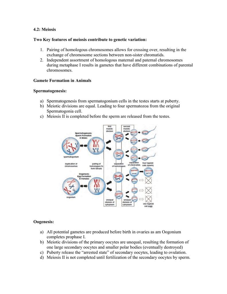 Genetic Variation Worksheet Switchconf – Variation Worksheet