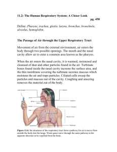 11.2: The Human Respiratory System: A Closer Look pg. 450