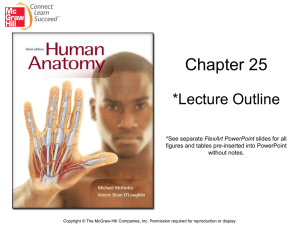 Chapter 25 *Lecture Outline FlexArt PowerPoint figures and tables pre-inserted into PowerPoint