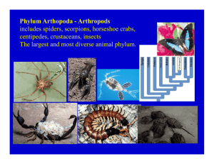 Phylum Arthopoda - Arthropods includes spiders scorpions horseshoe crabs centipedes, crustaceans, insects