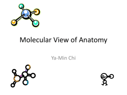 Molecular View of Anatomy Ya-Min Chi