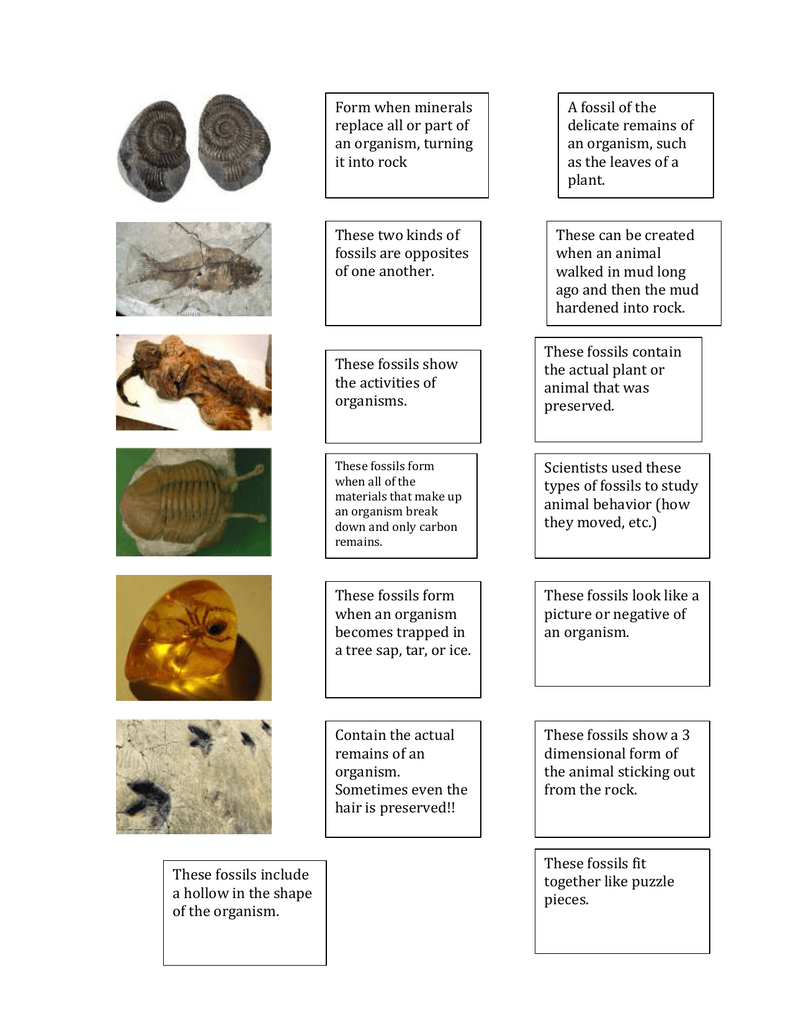 Uncategorized Types Of Fossils Worksheet form when minerals a fossil of the replace all or part of