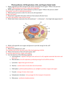 Photosynthesis, Cell Respiration, Cells, and Organs Study Guide