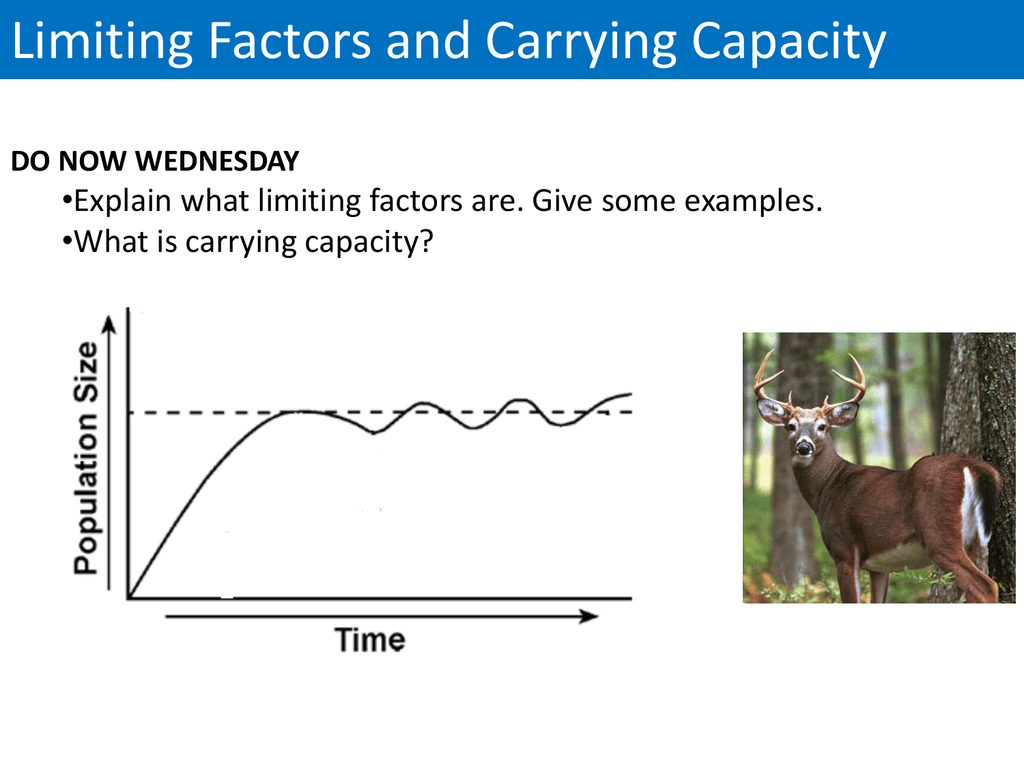 Limiting Factors And Carrying Capacity What Is Carrying Capacity