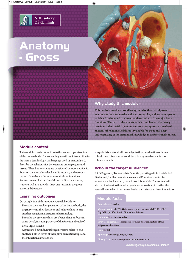 Anatomy Gross Why Study This Module