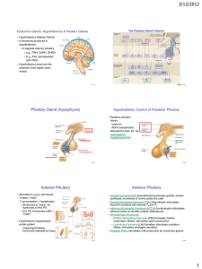 3/12/2012 Endocrine Glands: Hypothalamus & Pituitary Glands