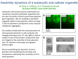 Assembly dynamics of a eukaryotic sub-cellular organelle