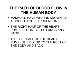 THE PATH OF BLOOD FLOW IN THE HUMAN BODY