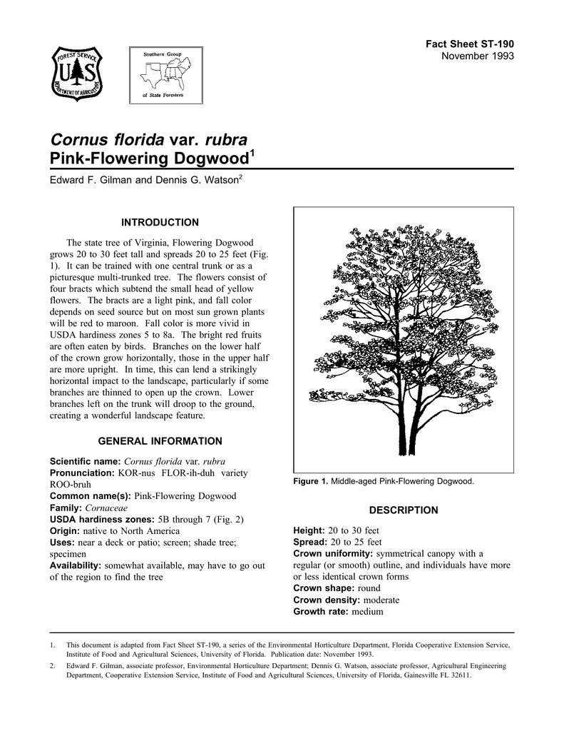 Cornus florida var rubra pink flowering dogwood fact sheet st 190 1 mightylinksfo