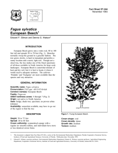 Fagus sylvatica European Beech Fact Sheet ST-244 1