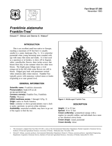 Franklinia alatamaha Franklin-Tree Fact Sheet ST-260 1