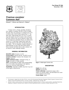 Fraxinus excelsior Common Ash Fact Sheet ST-264 1