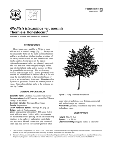 Gleditsia triacanthos var. inermis Thornless Honeylocust Fact Sheet ST-279 1