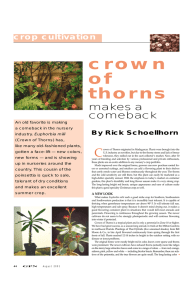 crown of thorns makes a
